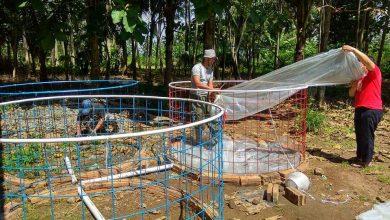 Photo of Proses Pembuatan kolam Ikan lele